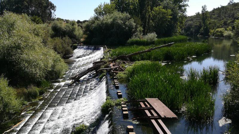 Limpeza e desobstrução do rio Nabão entre a cidade e o Açude de Pedra